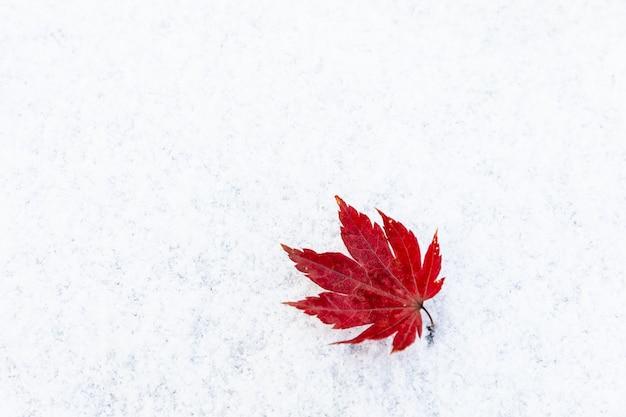 Feuille rouge sèche sur la neige hiver en corée
