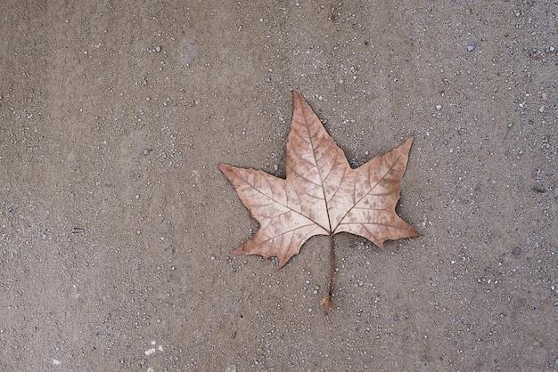 Une feuille sèche solitaire sur le sol