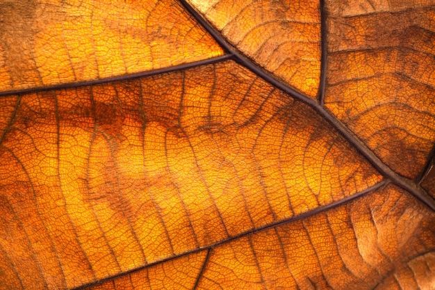Feuille sèche texture et nature