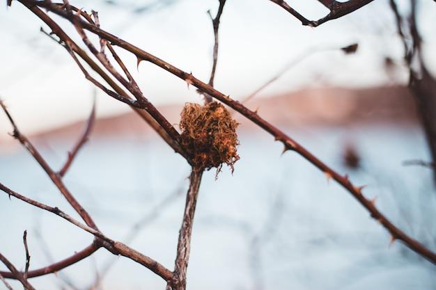 Feuille séchée brune sur une branche d'arbre brun