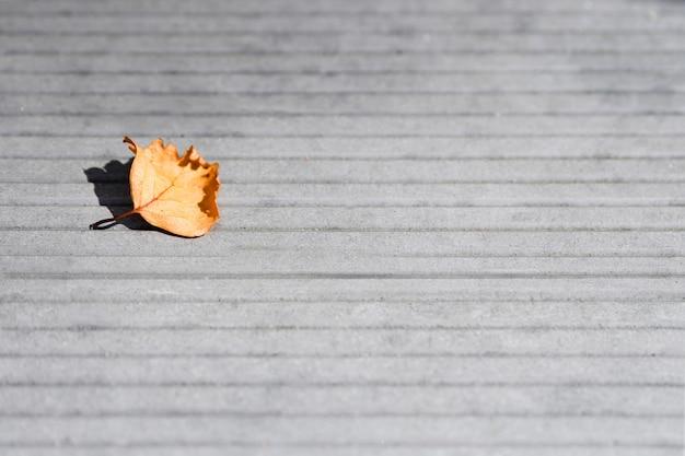 Feuille séchée sur fond de sol en béton gris en journée d'automne ensoleillée