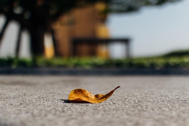 Feuille séchée jaune tombée sur le sol en ciment.