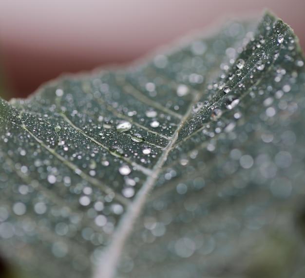 Feuille de texture macro grande feuille verte avec des gouttes d'eau close-up