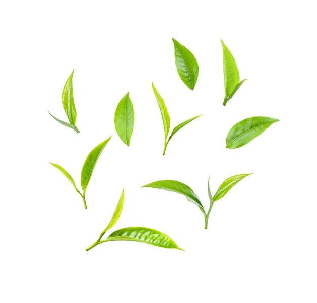Feuille de thé vert sur fond blanc