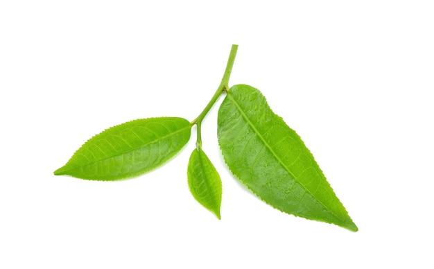 Feuille de thé vert avec des gouttes d'eau.