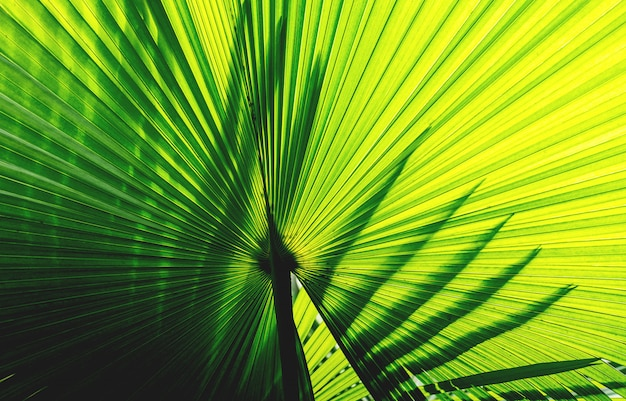 Feuille tropicale verte