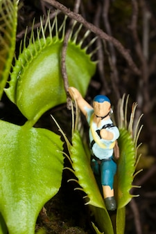 Feuille de venus flytrap mangeant un homme miniature