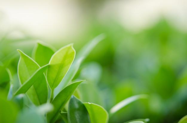 Feuille vert nature