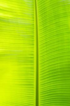 Feuille verte de banane pour le fond.