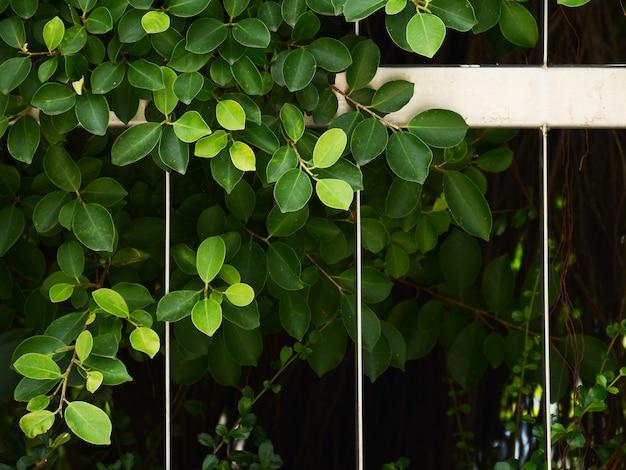 Feuille verte et branche au mur de la cage en métal