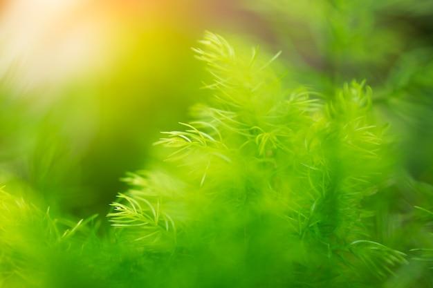 Feuille verte sur le concept de fond de verdure floue