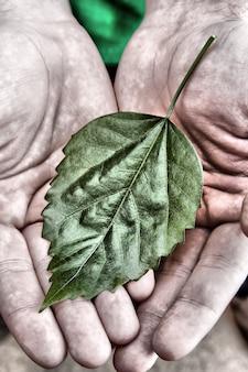 Feuille verte dans les paumes des mains de l'homme