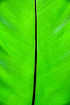 La feuille verte est fraîche sur les lignes de motif