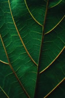 Feuille verte exotique comme fond de nature organique, changement climatique et concept d'environnement écologique