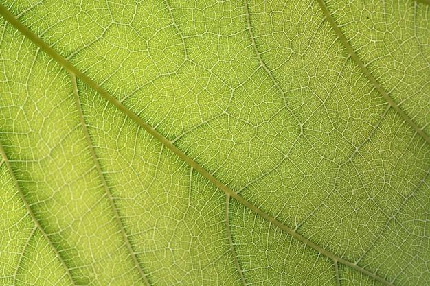 Feuille verte fibre closeup pour le fond