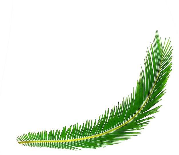 Feuille verte de fond d'arbre de cycas