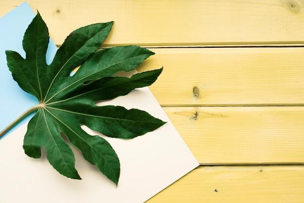 Feuille verte sur fond blanc et papier sur la table en bois jaune