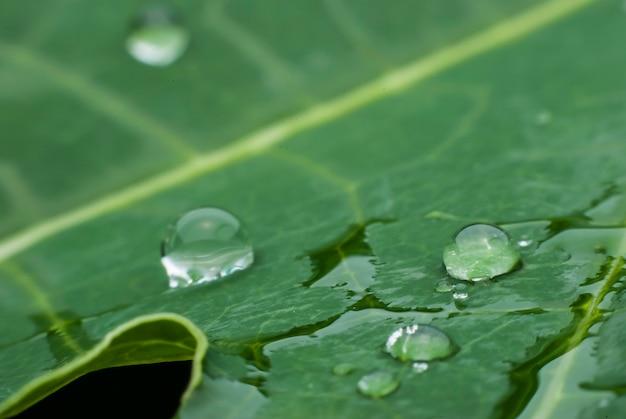 Feuille verte avec fond de gouttes d'eau