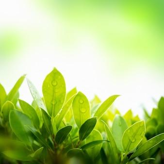 Feuille verte avec un fond naturel flou dans le jardin.