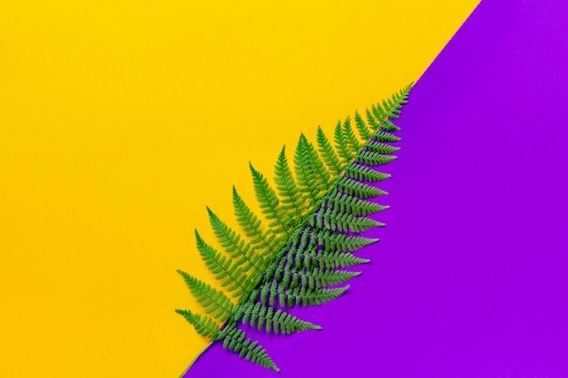 La feuille verte de fougère divise le fond lumineux de tendance en diagonale en deux parties