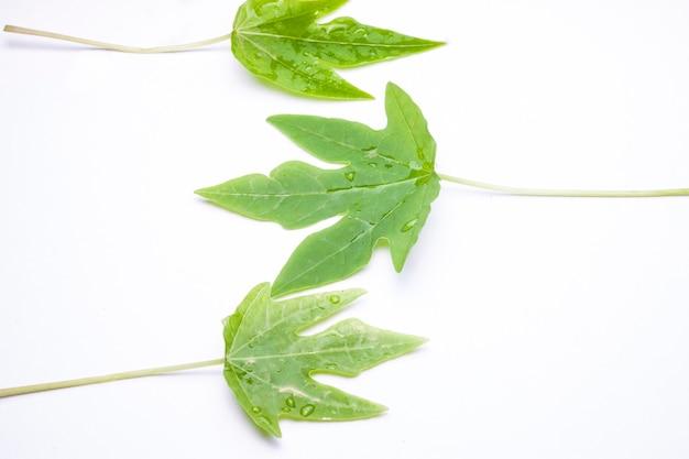 Feuille verte avec des gouttelettes d'eau, gros plan sur fond blanc