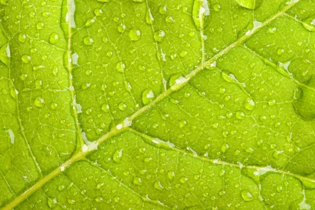 Feuille verte avec des gouttelettes d'eau