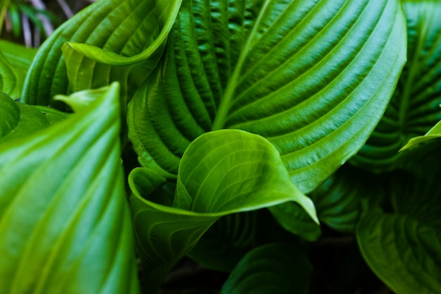 Feuille verte avec des gouttes d'eau pour