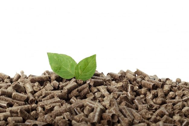 Feuille verte sur des granulés de bois solides
