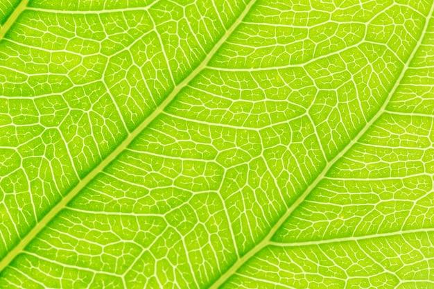 Feuille verte motif texture de fond avec la lumière derrière