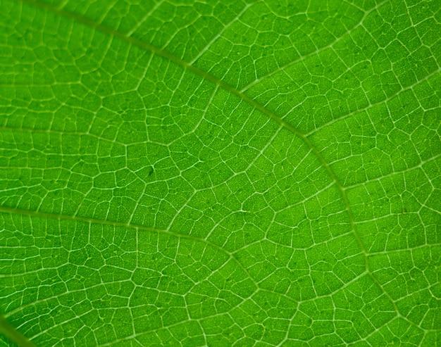 Feuille verte nature fond vintage sélectionnez une mise au point spécifique
