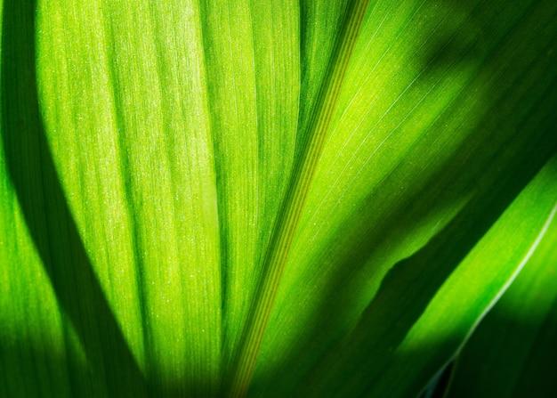 Feuille verte avec une ombre floue