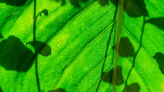 Feuille verte avec ombre laisse floue