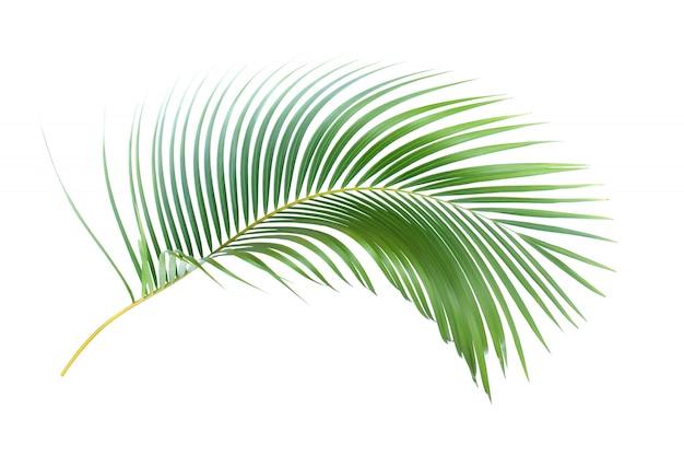 Feuille verte de palmier sur fond blanc avec un tracé de détourage