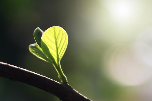 Feuille verte avec le soleil dans la nature