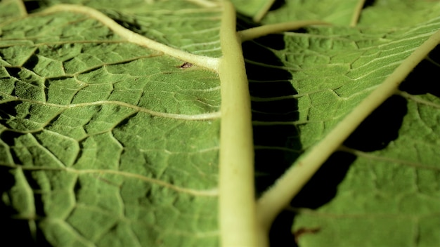 Feuille verte surdimensionnée avec de petits éléments