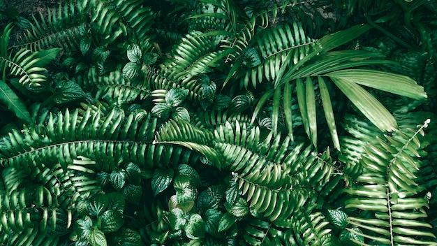 Feuille verte tropicale dans les tons sombres.