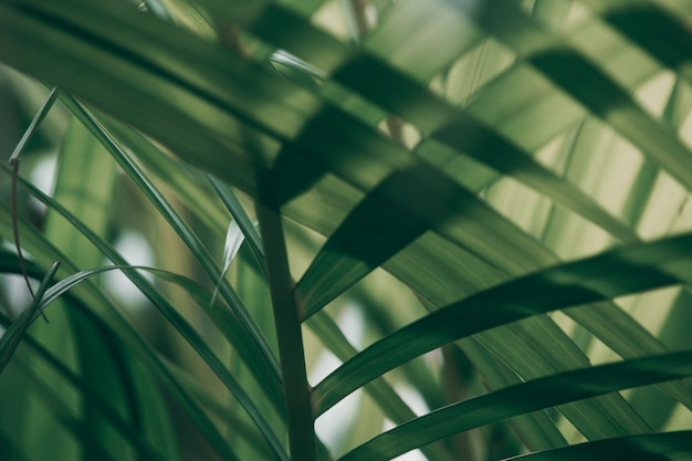 Feuille verte tropicale floue à l'extérieur de la fenêtre, ton foncé