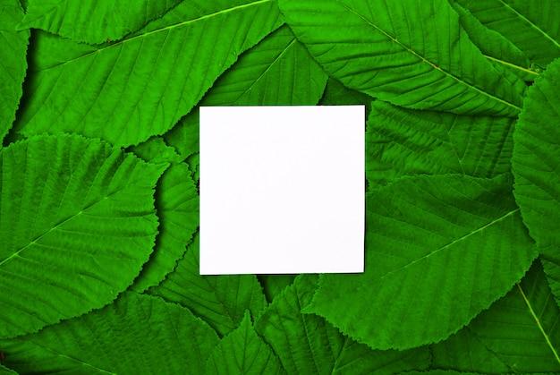 Feuille vide blanche parmi les feuilles vertes de châtaignier