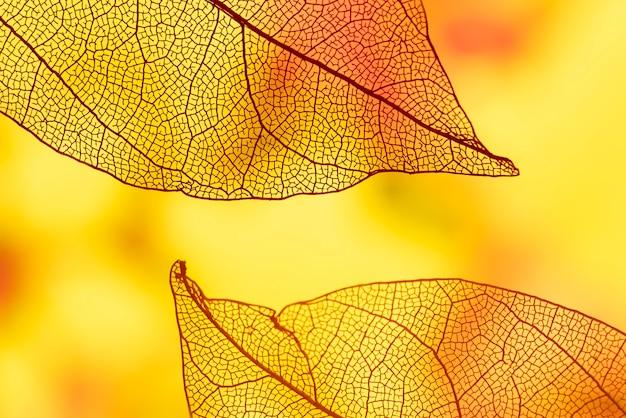 Feuilles abstraites avec orange et jaune