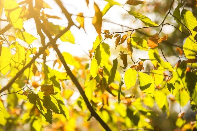 Feuilles d'arbre d'automne. fond de texture. belle photo nature. contexte saisonnier.