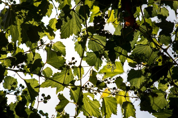 Feuilles sur un arbre