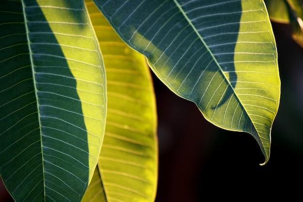 Feuilles d'arbres de forêt tropicale texture background