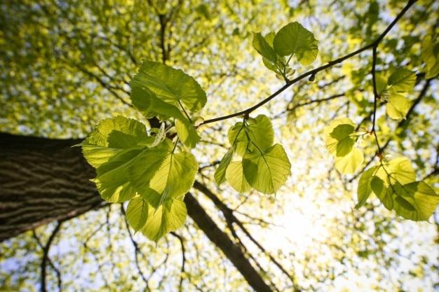 Les feuilles des arbres photo gratuite