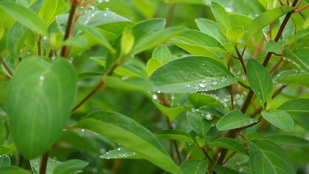 Feuilles et arbres en saison des pluies. il y a une goutte d'eau.