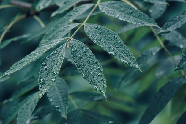 Feuilles d'arbres verts texturées dans la nature en automne