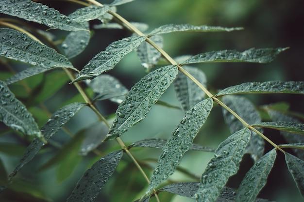 Feuilles d'arbres verts texturés en automne dans la nature