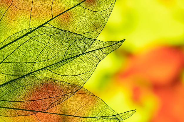 Feuilles D'automne Abstraites Vives Photo Premium