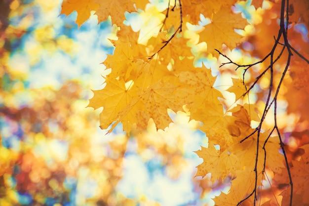 Feuilles d'automne sur un arbre mise au point sélective.