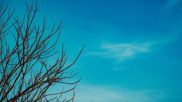 Feuilles d'automne avec le ciel bleu