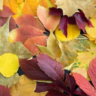 Feuilles d'automne coloré, couché sur le sol.